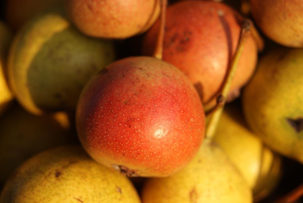 Birne, Obst, Sommer, Genuss, Rot, Gelb
